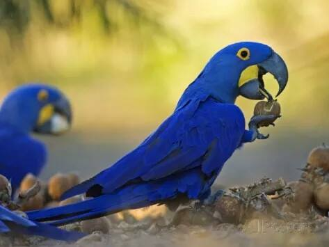 The Jealous Parrot