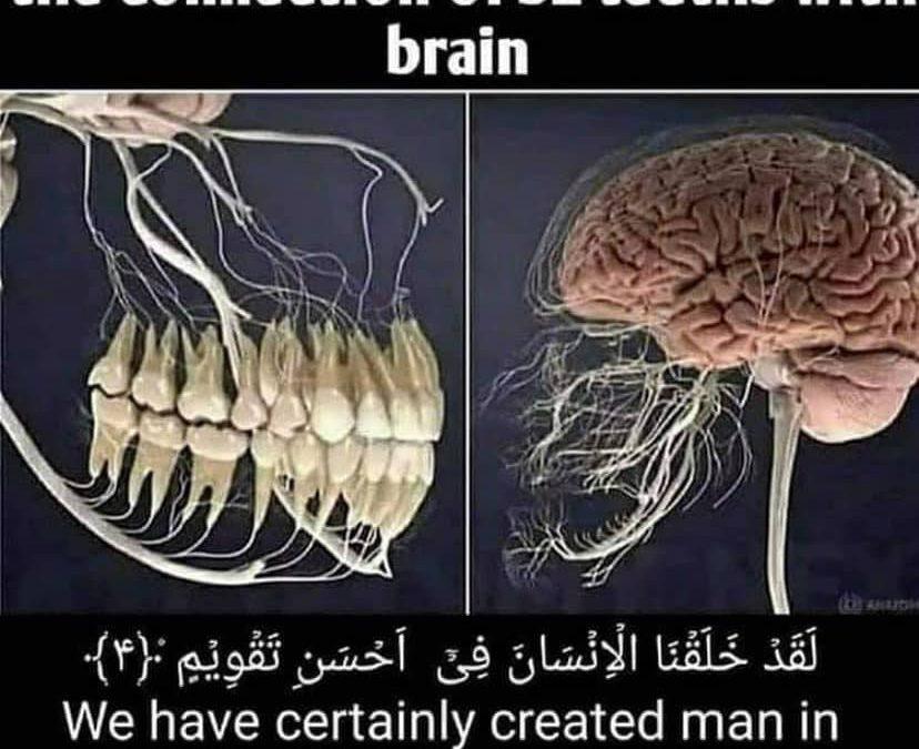 Allah's Awesome Creation – Teeth